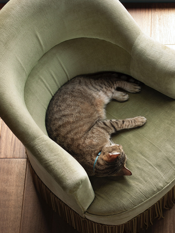 Cat resting on fire damaged chair that has undergone smoke damage restoration